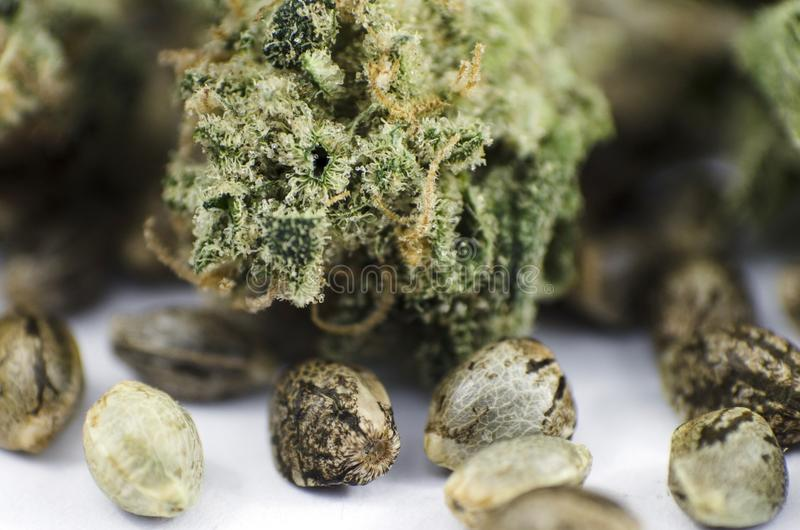 Детализируйте взгляд крупного плана медицинских семян и бутона марихуаны стоковое фото rf