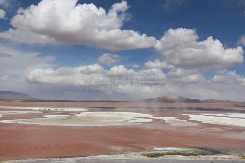 Детали Laguna Колорадо, Боливия, Южная Америка стоковые изображения rf
