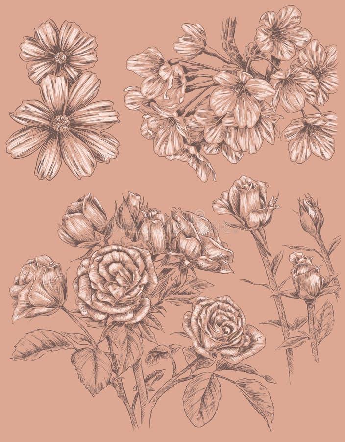 Детальной комплект цветка Sketchbook нарисованный рукой бесплатная иллюстрация