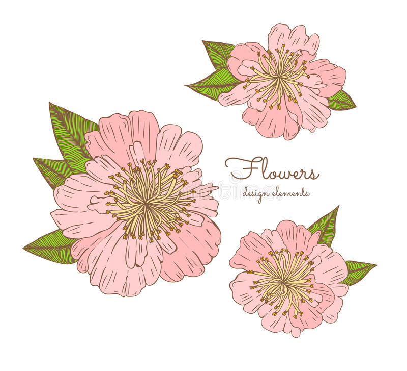 Детальной цветки нарисованные рукой установили - зацветая пионы белизна изолированная предпосылкой Цветки вектора в винтажном сти иллюстрация вектора