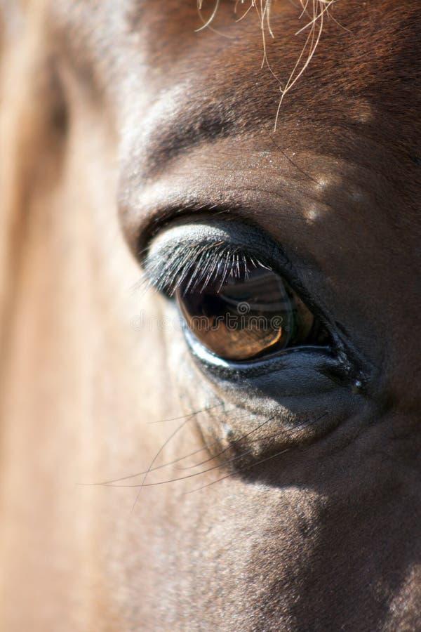 Деталь глаза лошади стоковая фотография rf