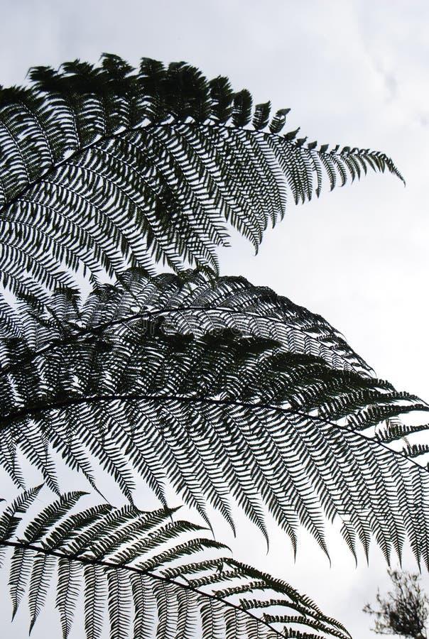 Деталь дерева папоротника стоковые фото