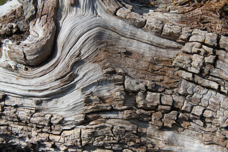 Деталь дерева серебряной березы стоковые изображения rf