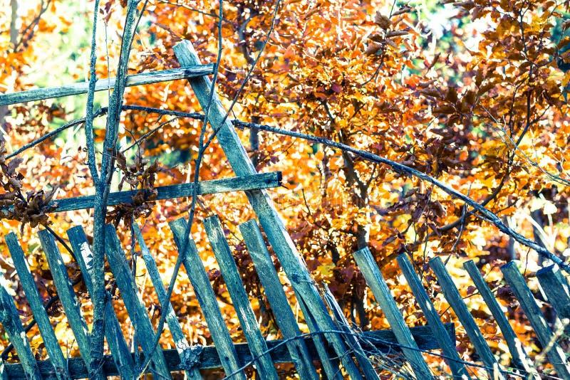 Деталь загородки grunge одичалой с золотыми листьями стоковое фото