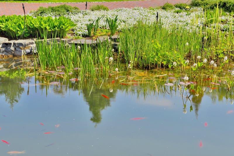 Деталь красивого озера в парке стоковая фотография
