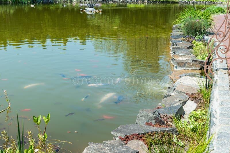Деталь красивого озера в парке стоковые изображения