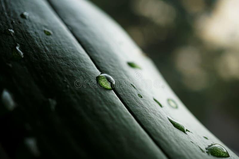 Деталь макроса воды падает на зеленые лист с увеличиванными белыми точками как символ предпосылки свежей и здоровой природы стоковые фотографии rf