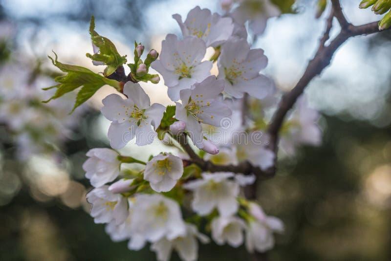 Деталь цветения стоковые фото