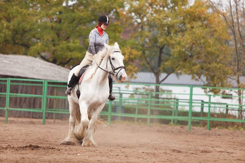 детеныши женщины графства riding лошади стоковые изображения rf