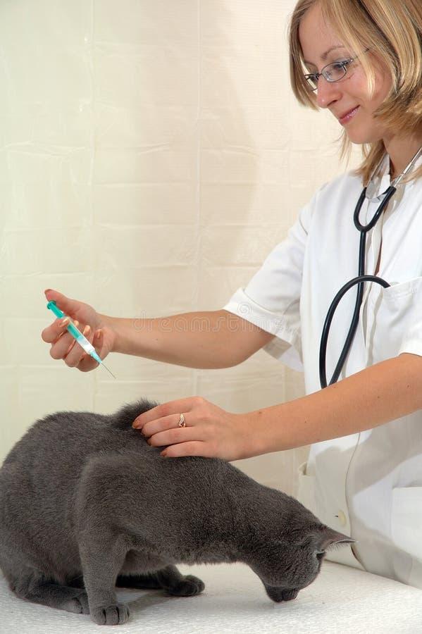 детеныши женщины хирурга ветеринарные стоковая фотография
