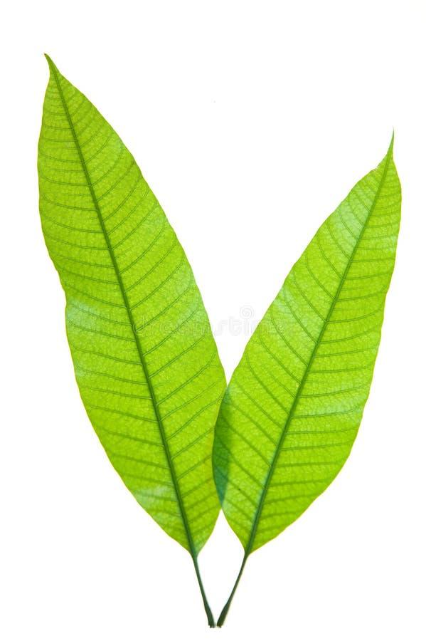 Download детеныши листьев стоковое изображение. изображение насчитывающей средства - 6865691