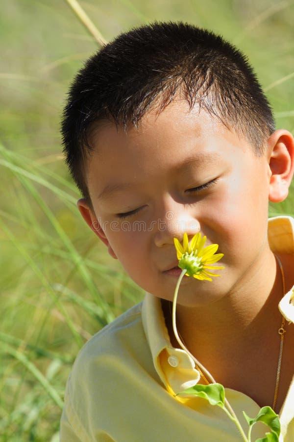 детеныши обнюхивать цветка мальчика стоковое изображение