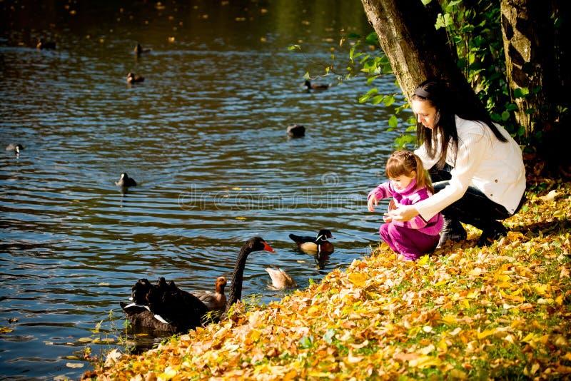 детеныши парка семьи осени стоковая фотография rf