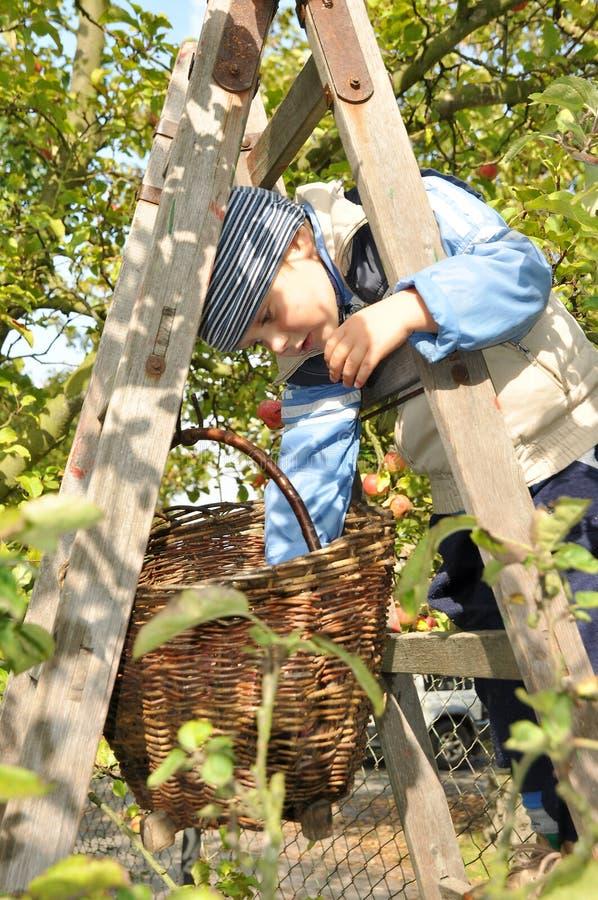 детеныши рудоразборки мальчика яблок стоковая фотография rf