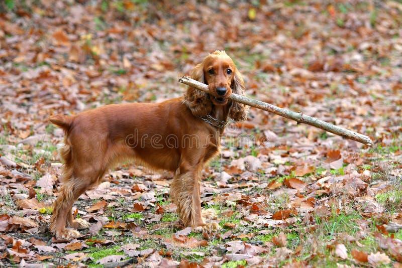детеныши ручки собаки стоковые фотографии rf