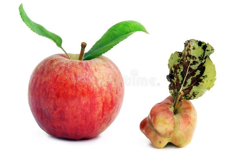 детеныши яблок здоровые тухлые больные стоковые фотографии rf