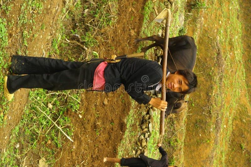детеныши hmong белые стоковые изображения rf