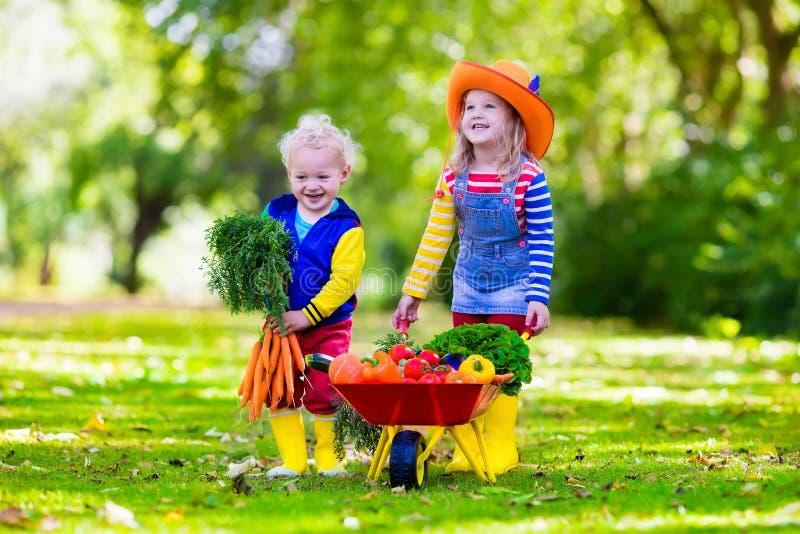 Дети выбирая овощи на органической ферме стоковые изображения rf
