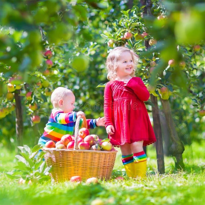 Картинка девочка собирает яблоки в саду для детей