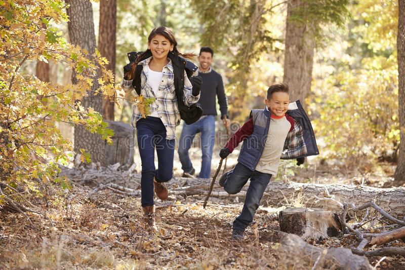 Дети в лесе бежать к камере, отцу смотря дальше стоковая фотография rf