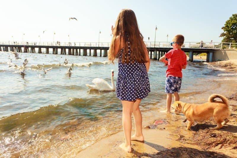 Дети играя с птицей белизны лебедя стоковое изображение rf