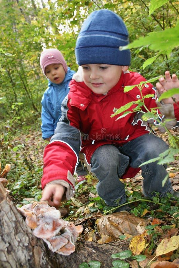 дети исследуют грибную полку стоковое изображение