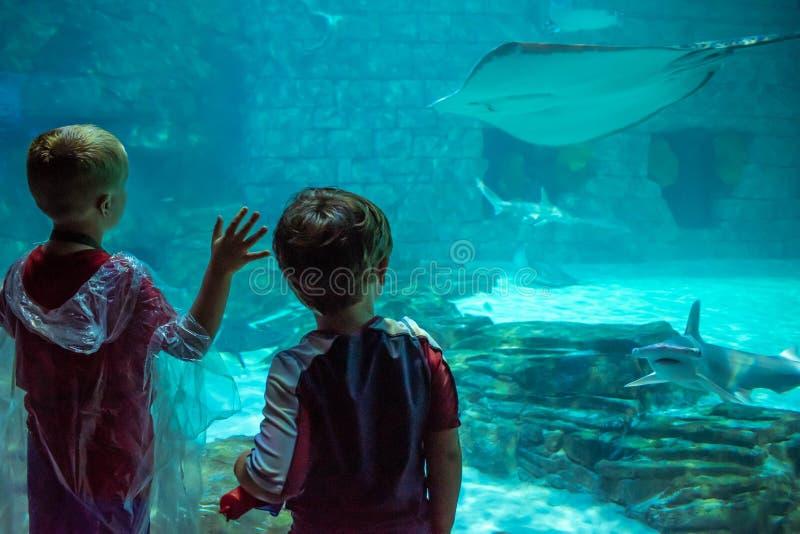 Дети наблюдая морские дьяволов и акул в аквариуме на Seaworld 1 стоковая фотография rf