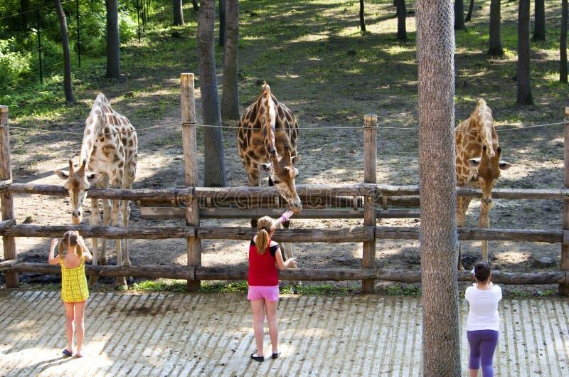 Дети на зоопарке стоковые фото
