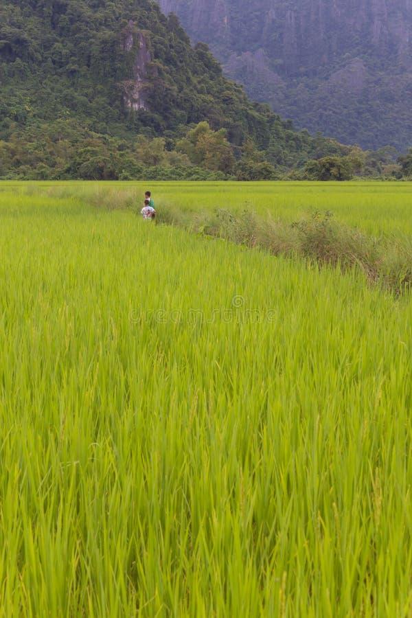 Дети на фермах. стоковая фотография