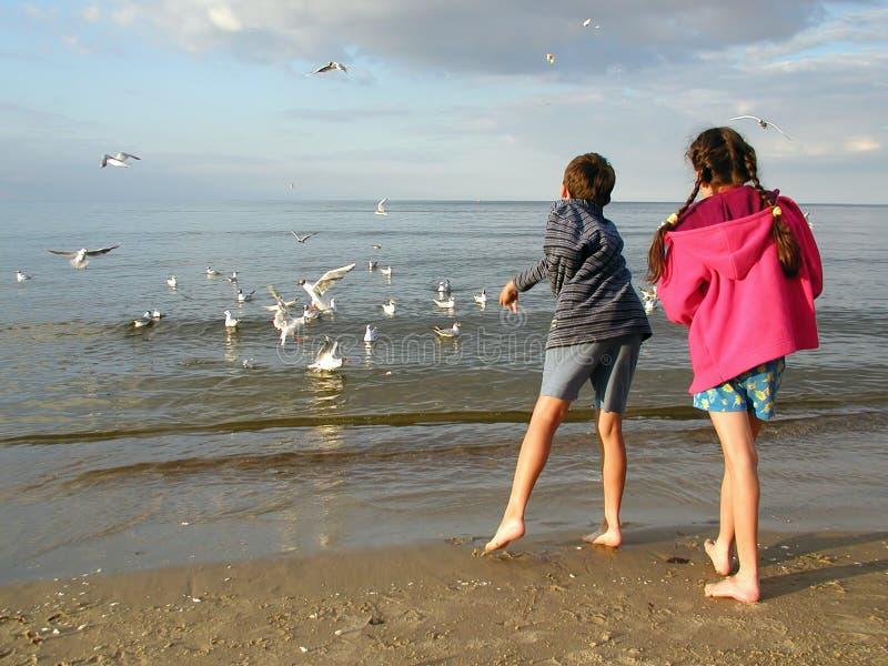 дети подавая чайки Стоковое Фото