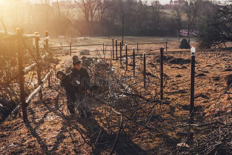 Дети помогают сжать швырок на зима, защищая ветви от дерева стоковое фото