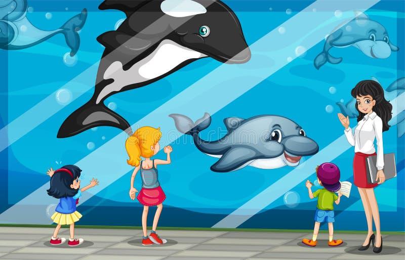 Дети смотря дельфинов на аквариуме иллюстрация вектора