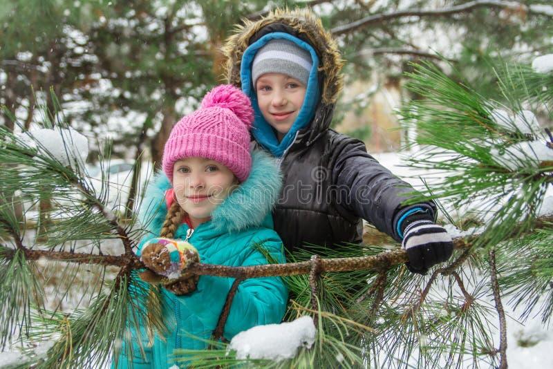 Дети смотря через снежные ветви штыря стоковые фотографии rf