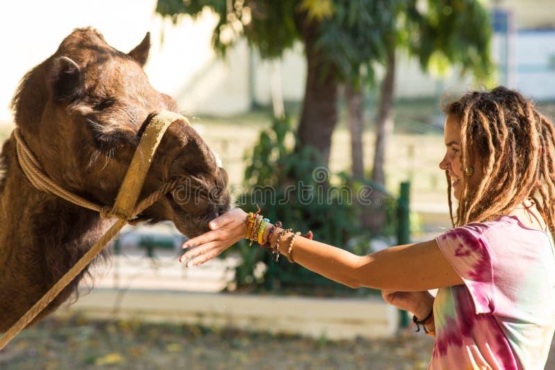 Дети туристов ехать верблюд стоковое изображение rf