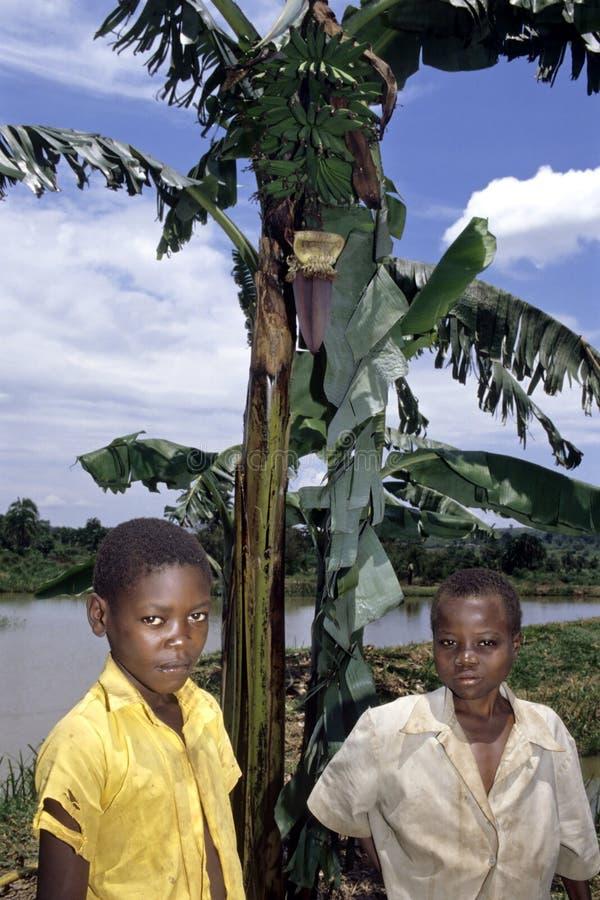 Дети угандийца представляют для бананового дерева и озера стоковые изображения rf