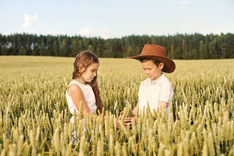 2 дет мальчик и девушка рассматривают кукурузные початки на пшеничном поле стоковая фотография rf