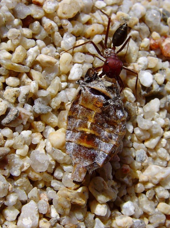 деятельность муравея стоковое изображение