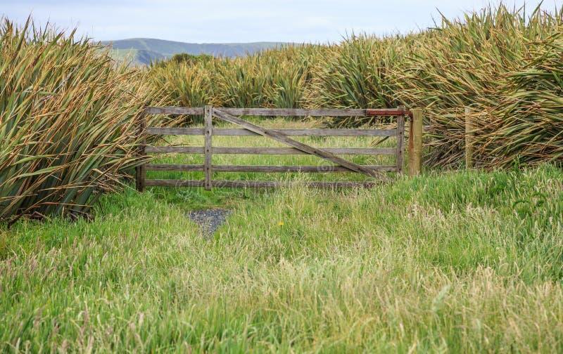 Деятельность при семьи Новой Зеландии с перемещением поездки лета сценарным, естественным открытым пространством лужайки зеленой  стоковое изображение rf