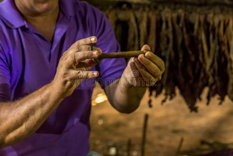 Делать сигары в Vinales, Куба #19/21 стоковые фотографии rf