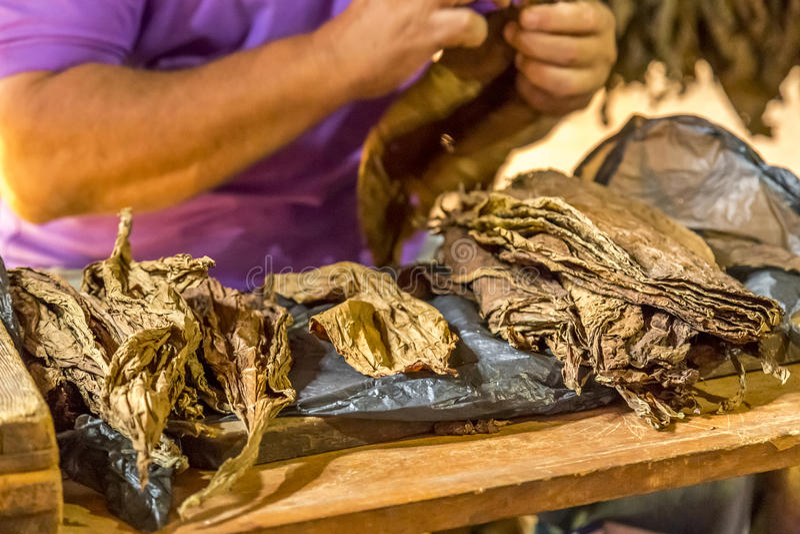 Делать сигары в Vinales, Куба #3/21 стоковые изображения rf