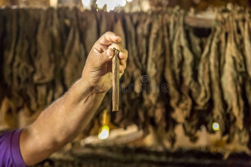 Делать сигары в Vinales, Куба #20/21 стоковое фото rf