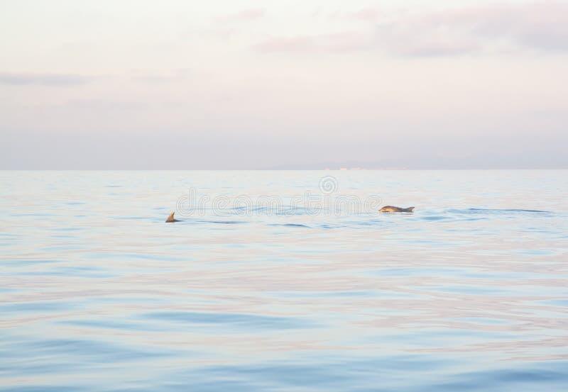 Дельфины Мальорка стоковые фото