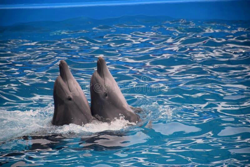 Дельфины, Одесса стоковые фотографии rf