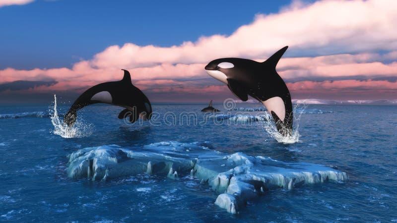Дельфин-касатки в Северном океане иллюстрация вектора