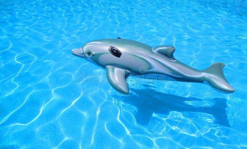 Дельфин резины игрушки стоковая фотография