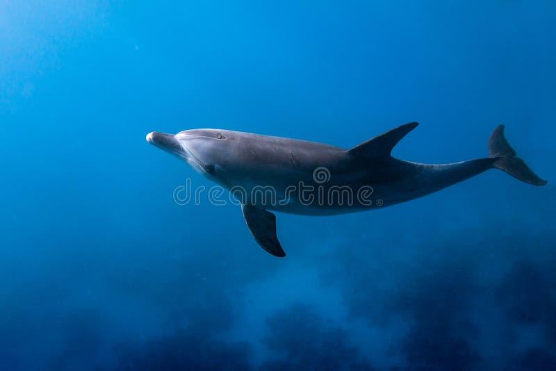 Дельфин смотря вверх стоковое фото