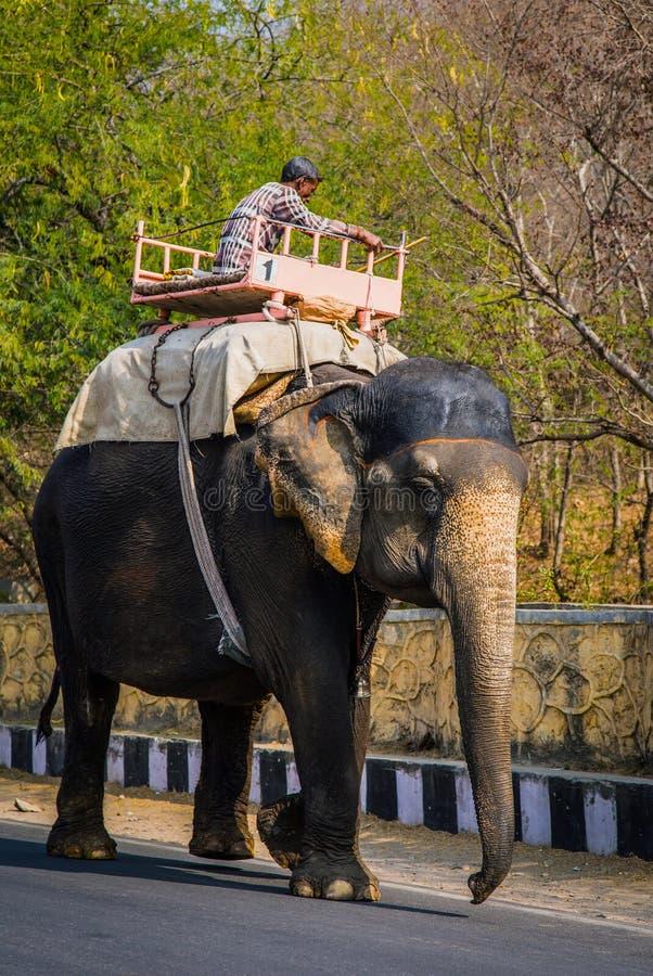 ДЖАЙПУР, ИНДИЯ - 12-ОЕ ЯНВАРЯ 2018: Слон идет вдоль дороги Традиционный индийский корабль стоковые изображения
