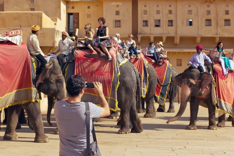 Джайпур, Индия, 10-ое ноября 2011: Всадники индийского слона едут с туристами к янтарному форту стоковые изображения