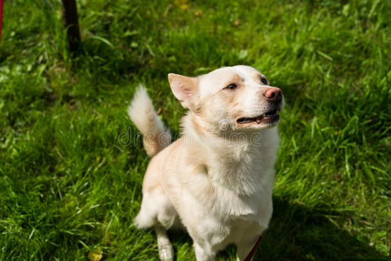 Джесс Джеймс собака стоковое фото rf