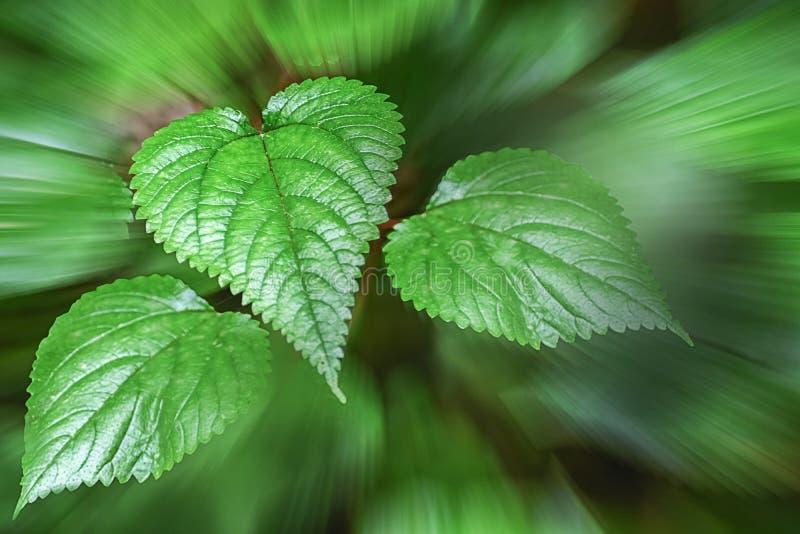 Джунгли выходят темно-зеленого цвета с красными покрашенными венами ясно показывая стоковое изображение